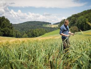 A man is standing in a field of garlic with wooded hills in the background